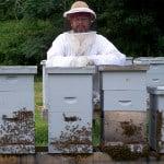 Ray-beehive