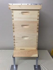 1st Year Hive