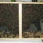 2015 Bee Season – Pre-orders