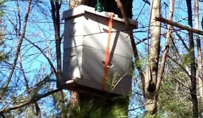 Feral Honey Bee Study by University of Georgia Honey Bee Lab