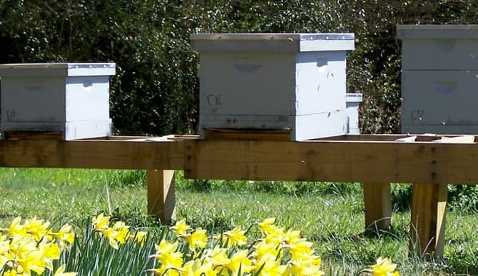 Winterizing the hive – Southeastern Region