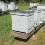 Your first hive purchase!