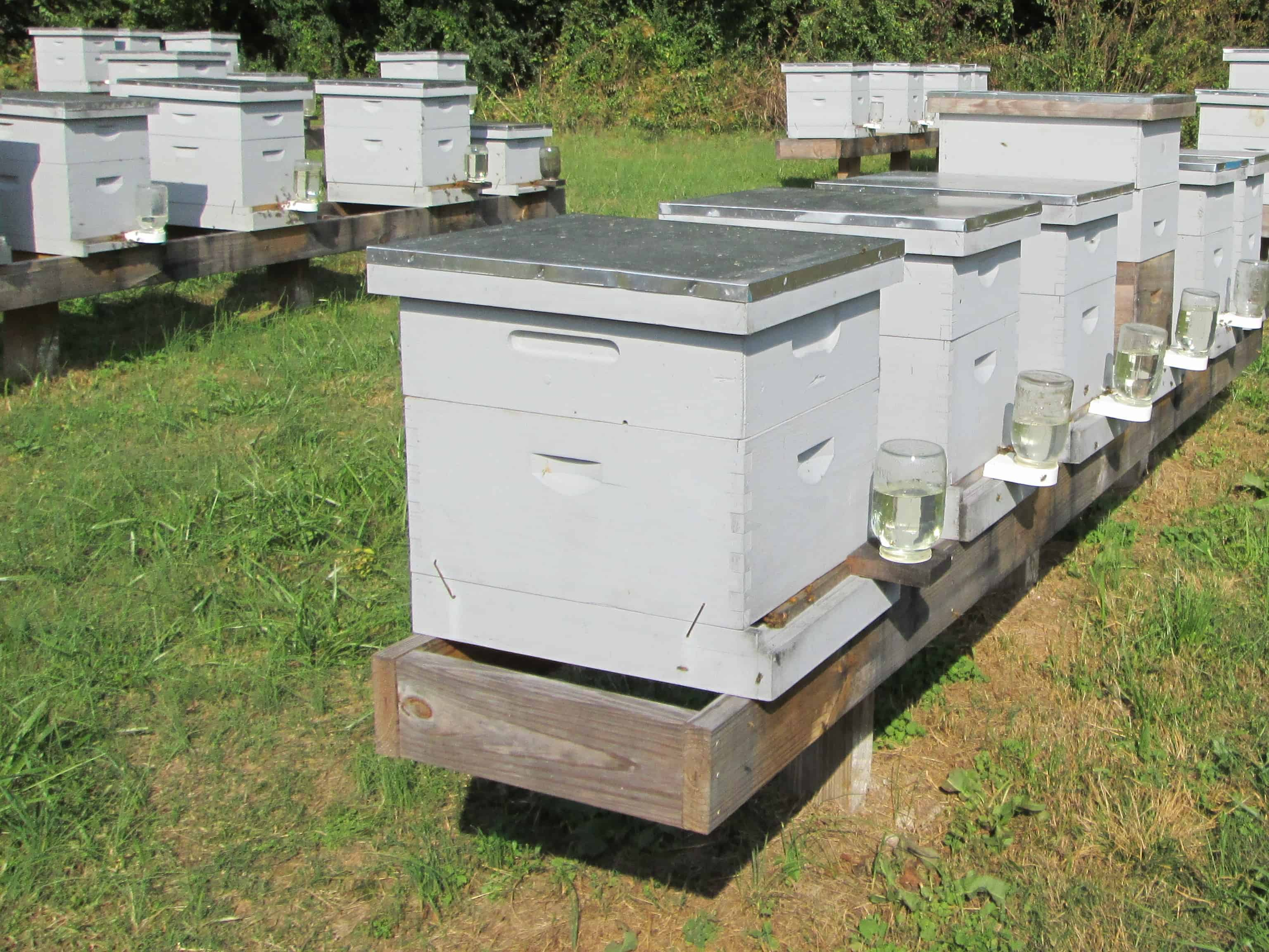 how to put your bee nuc in the hive