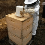 What is the best way to feed your bee hive?