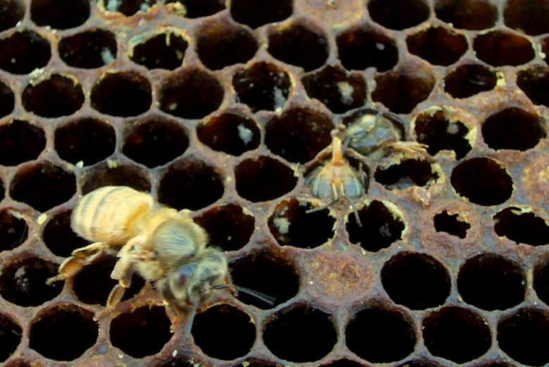 When do you replace the frames and foundation in your bee hive?