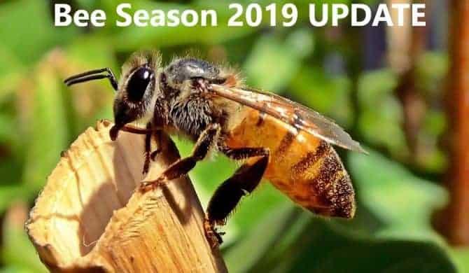 Bee Season 2019 Update: March 15, 2019