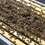 When do you add a honey super?