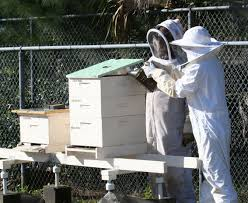 Mid-Summer Hive Inspection